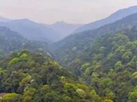 蜻蜓王国的自然世界