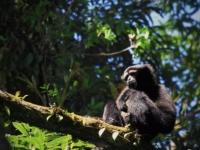 在高黎贡山遇见你的猿份