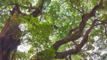 古树系列课