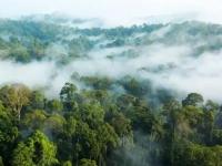 丹浓谷雨林探索